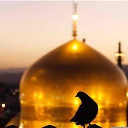 ای کبوتر که نشستی روی گنبد طلا